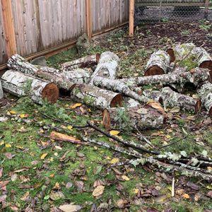 Free Fresh Cut Wood for Sale in Gig Harbor, WA
