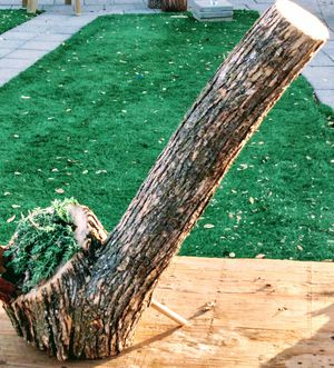 log planter with succulents for Sale in Loomis, CA