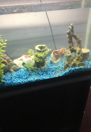 40 gallon fish tank with the stand for Sale in Bristow, VA
