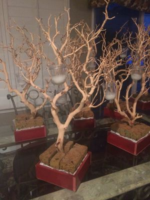 Four Manzanita Trees / Eight Centerpiece Boxes for Sale in Etiwanda, CA