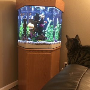 50 Gallon Tank With Fish for Sale in Olympia, WA