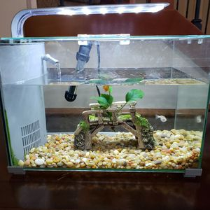 5 Gallons Fish Tank With All Accessories for Sale in Snohomish, WA