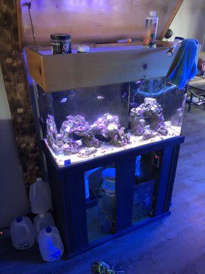 Established Marine Acrylic Aquarium 50gals for Sale in Escondido, CA