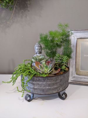 Live succulent arrangement with budda for Sale in Annandale, VA