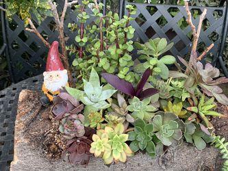 Succulent En Tronko for Sale in Downey,  CA