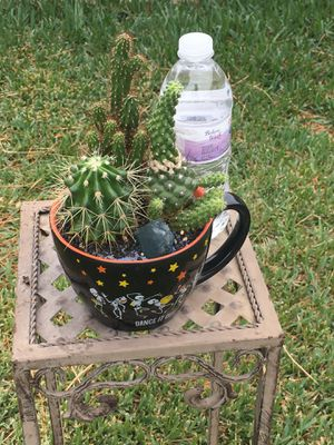 Beautiful Ceramic Cup with Variety Of Cactus for Sale in Fontana, CA