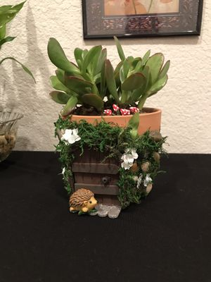 Fairy 🧚♀️ succulent plant 🌱 for Sale in Lochbuie, CO
