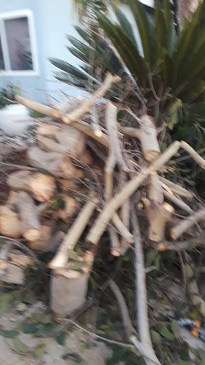 Free firewood for Sale in Imperial Beach, CA