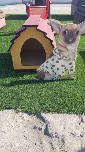 dog houses for Sale in San Diego, CA