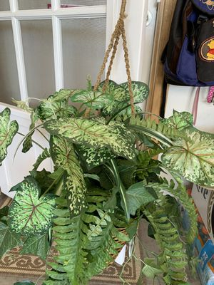 Fake fern hanging plant for Sale in Surprise, AZ