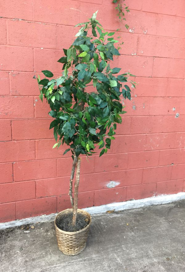 Potted flower plant 5ft 6""