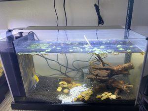 5 gallon fluval spec fish tank aquarium for Sale in Hesperia, CA