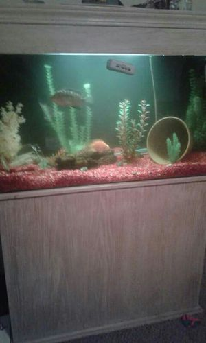 55 gallon self cleaning fish tank for Sale in Columbus, OH