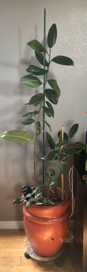 Potted plants for Sale in Stockton, CA