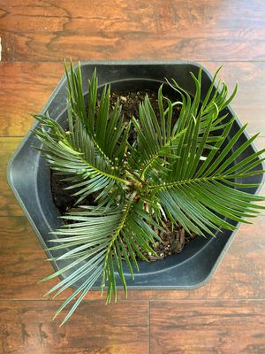 Plant for Sale in Sterling Heights, MI