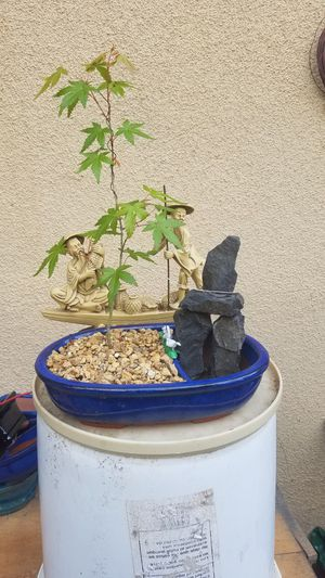 Japanese maple half pot water fountain like with rock for Sale in Fresno, CA