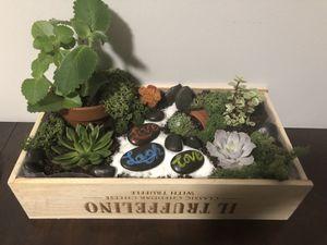 Plant terrarium for Sale in Lynn, MA