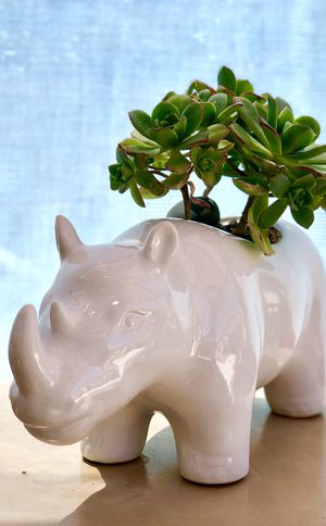 🌵 rhino succulent pot 🌵 for Sale in North Las Vegas, NV