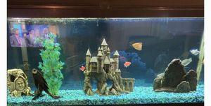 49 Gallon breeder fish tank for Sale in Port Orange, FL