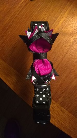 New size medium girls dog collar for Sale in Sudbury, MA