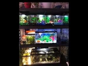 Fish tanks for Sale in Henderson, NV