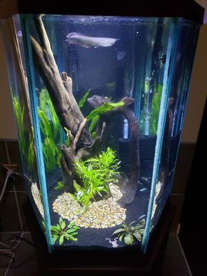 Hexagon fish tank and stand EVERYTHING for Sale in Eldersburg, MD