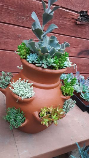 "18"" clay pots with succulent plants $50 each for Sale in Whittier, CA"