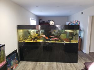 300 G Piano Bar Wood CUSTOM Made Acrylic Room Separator Monster Tank Fully Loaded for Sale in Los Angeles, CA