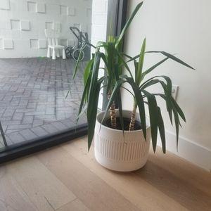 Mature Plant With West Elm Pot for Sale in Phoenix, AZ