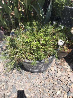 Plants 🌱 pot for Sale in Avondale, AZ