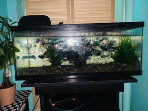 20 gallon long aquarium fish tank for Sale in Brooklyn, NY