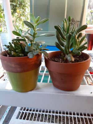 """Small pot 4X 4"""" with Succulent plants $6 each pot for Sale in Anaheim, CA"""