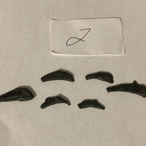 Ancient Greece Coins Lot Of 6 Olbia Dolphin 5th Century BC Bronze (2) for Sale in Salida, CA