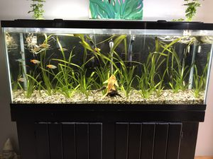 55 gallon full setup for Sale in Cleveland, OH