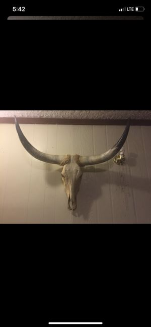 Authentic Longhorn Skull for Sale in Camp Hill, PA