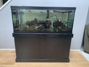 75 Gallon Fish Tank set up for Sale in Bonney Lake, WA