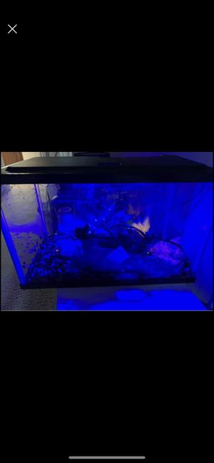 5 gallon fish tank with black light for Sale in Morrisville, NC