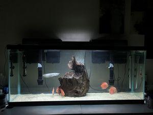 Aquarium!!! for Sale in West Covina, CA
