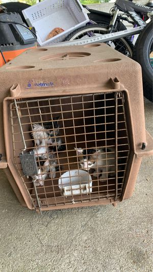 Cat cage for Sale in Richlands, NC