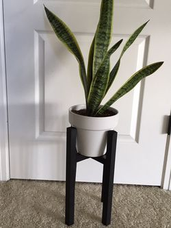 Snake plant in ceramic pot and wood stand for Sale in Happy Valley,  OR