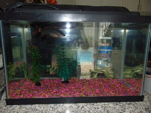 10 gallon fish tank with filter, gravel and lights for Sale in Las Vegas, NV