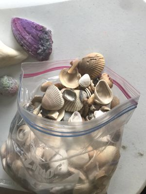 ARTS & CRAFTS Collected Seashells $33 for Sale in Middletown, PA