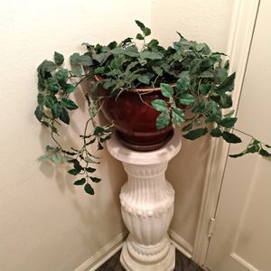 Fake plant for Sale in Wichita, KS