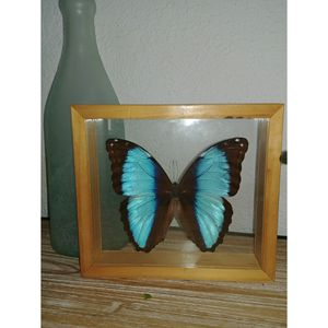 Real butterfly for Sale in West Park, FL