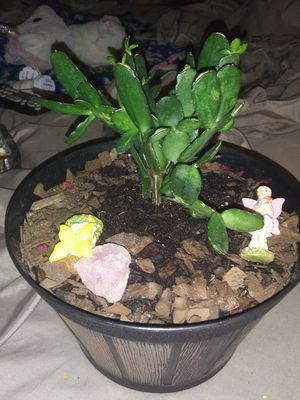 Live plant good healthy plant booms pink for Sale in Murfreesboro, TN