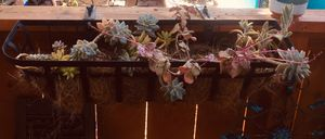 Plant Hangers with Succulent plants Included for Sale in San Diego, CA