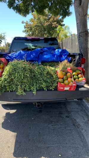 Venta de garbanza y de mangos for Sale in Richmond, CA