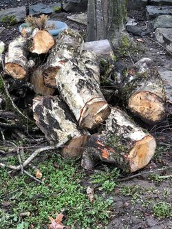 Free Wood - Cut prior to snow storm for Sale in Vancouver,  WA