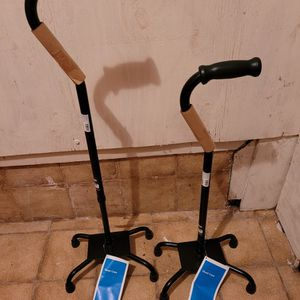 Cane for Sale in Hollywood, FL