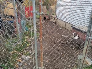 Large dog run and 2 dog houses for Sale in Maple Heights, OH